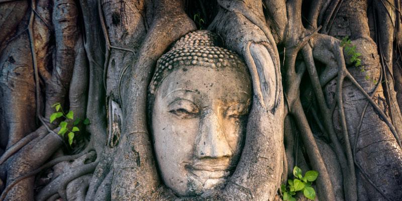 Baum Buddha